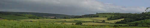 A typical Devon farming landscape.